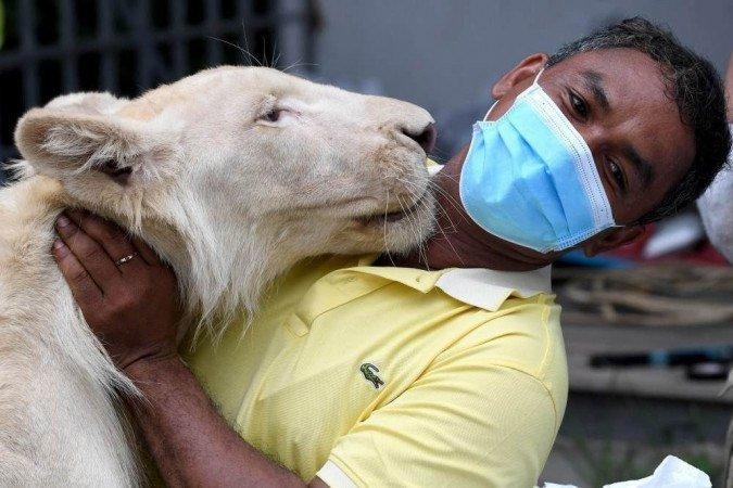 Leão de estimação apreendido no Camboja é devolvido ao dono